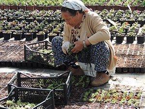 Bademler çiftçisi